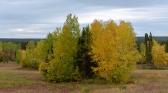 Big Birch View