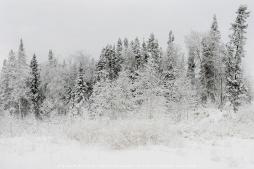 Silver-Winter